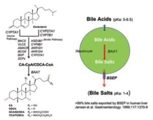 BSEPcyte 300x235 - Drug Transporter Services